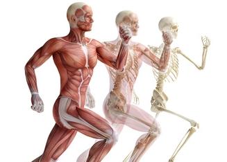 Biology Tutoring College Anatomy